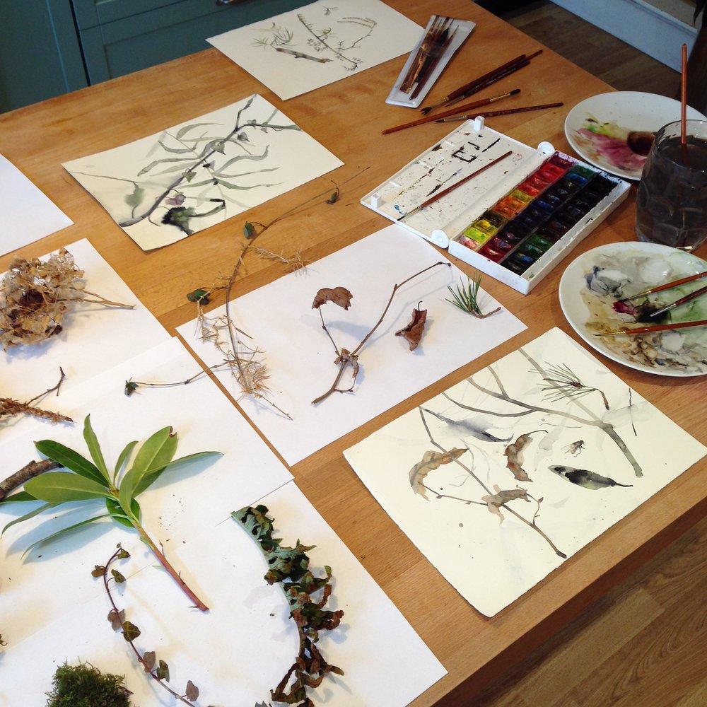 Lindsay McDonagh Botanical painting