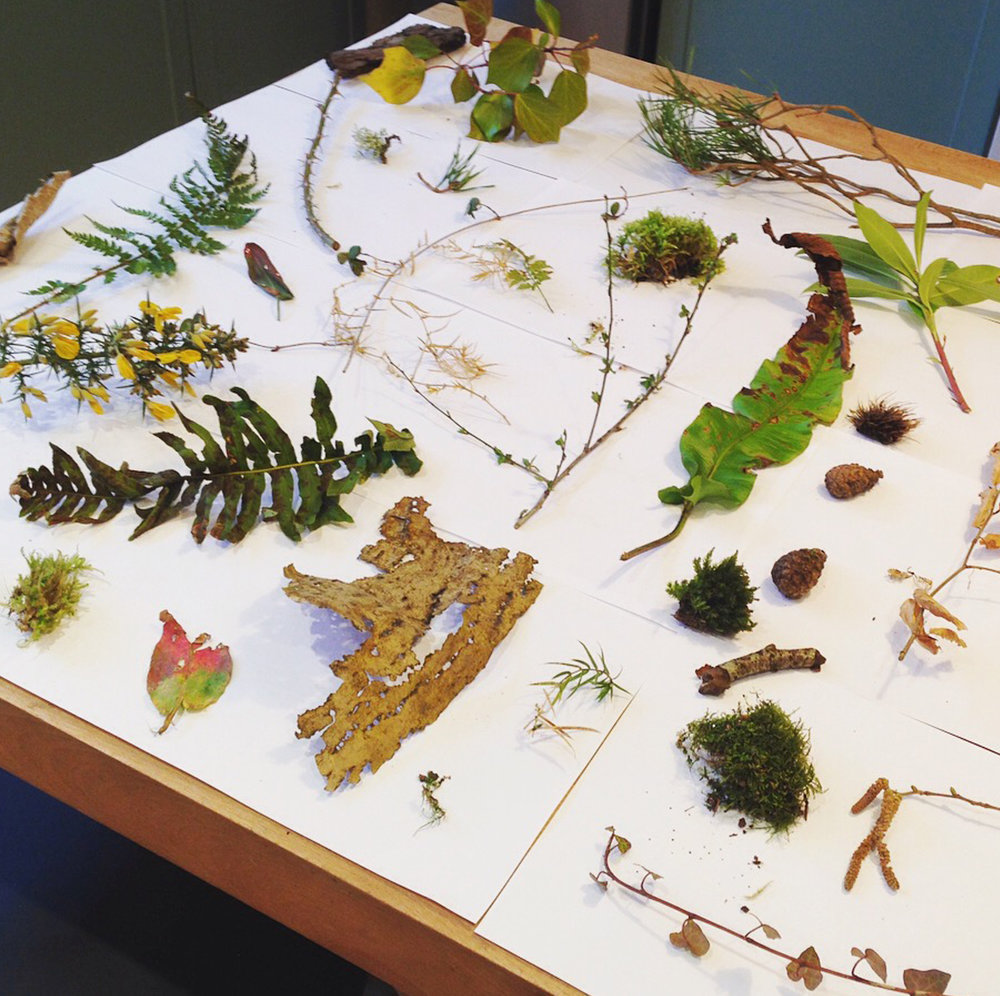 Lindsay McDonagh Nature table
