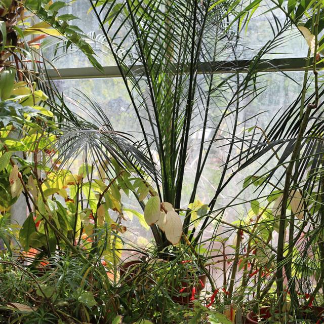 greenhouse Lindsay McDonagh.jpg