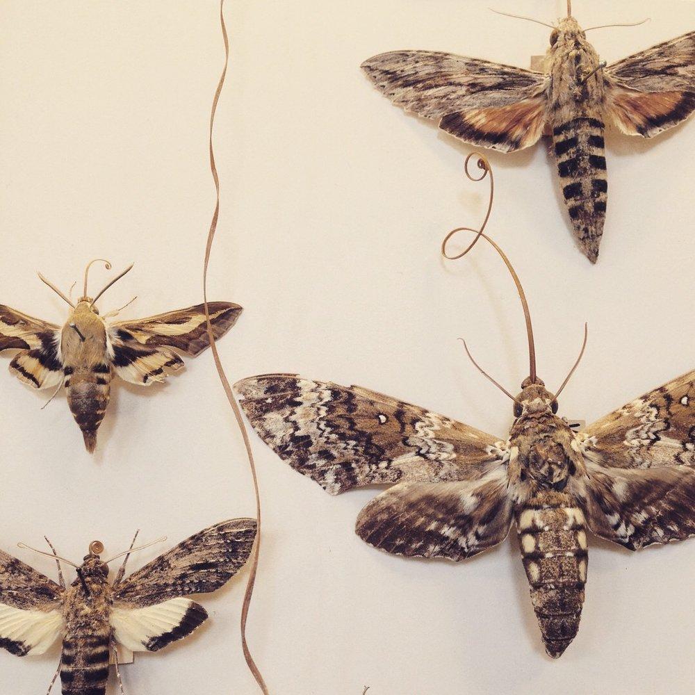 Moth patterns photo by Lindsay Mcdonagh