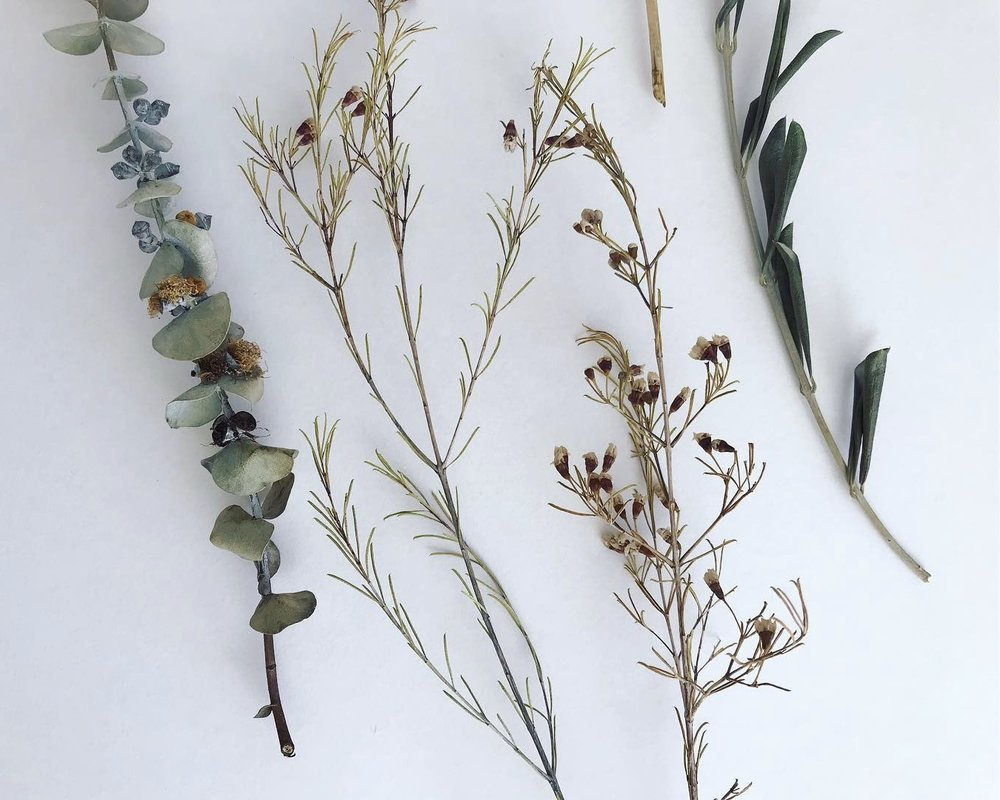 twigs Lindsay McDonagh