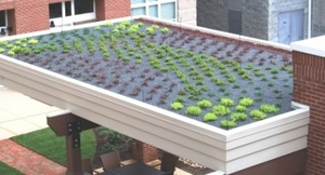 AyrsleyGreenRoof.jpg