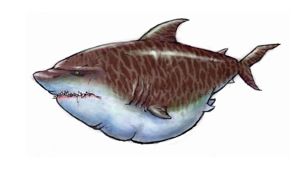 sharkconcept_v05.jpg