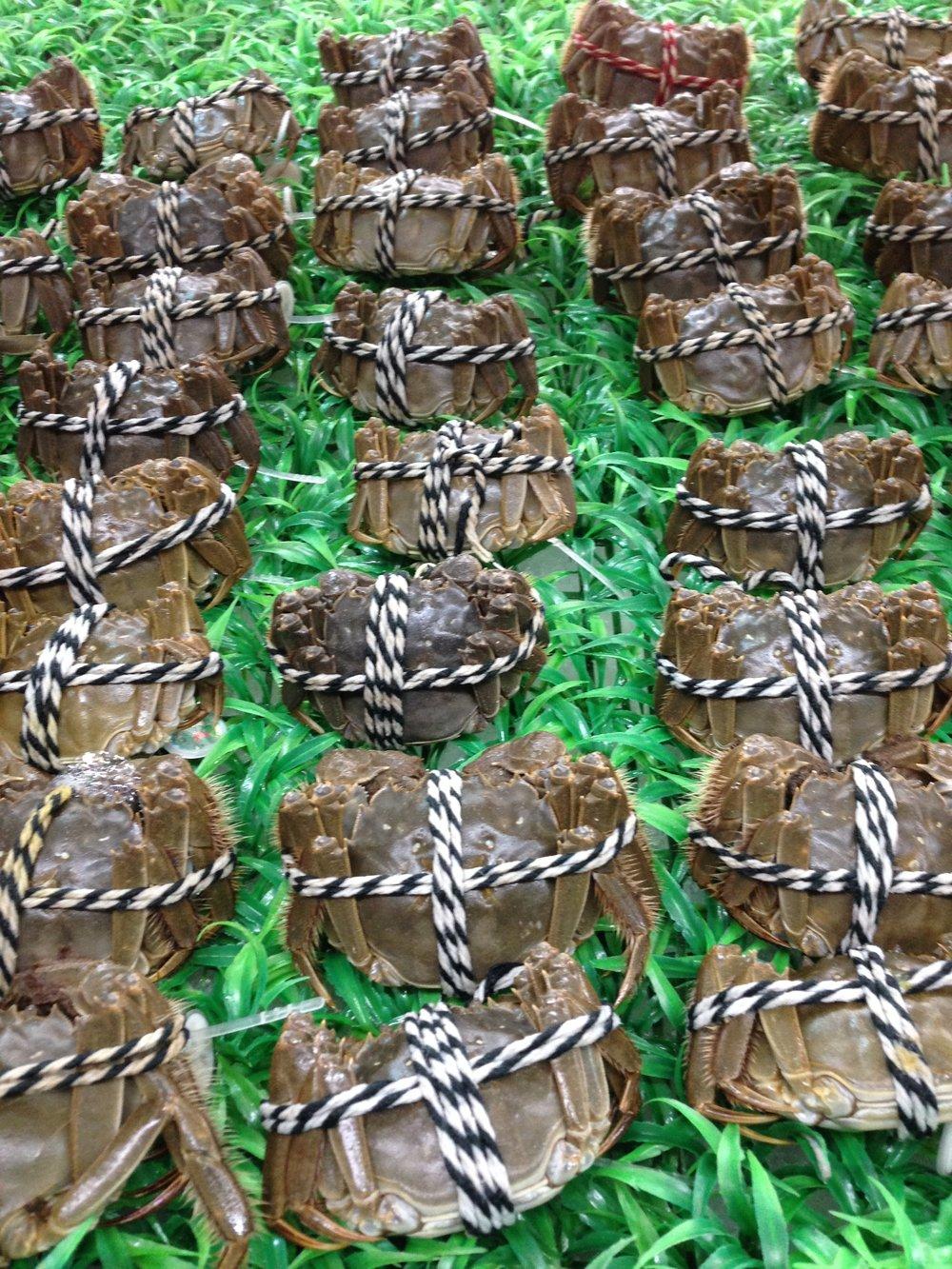 Fresh live crabs.