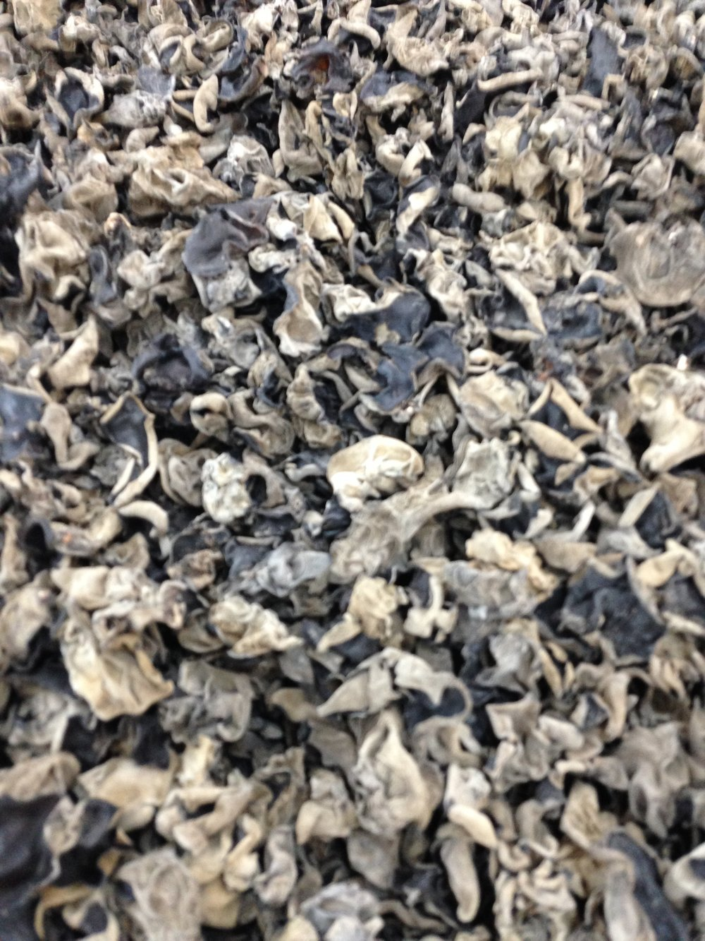 Dried mushrooms in bulk.