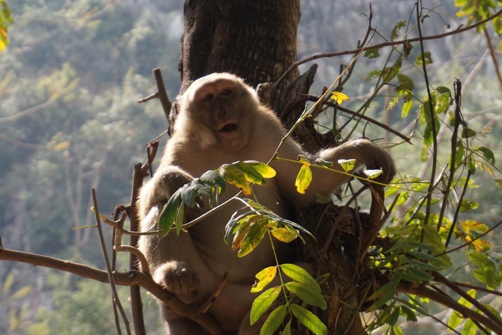 Chiang Rai Monkey Cave (Thailand)