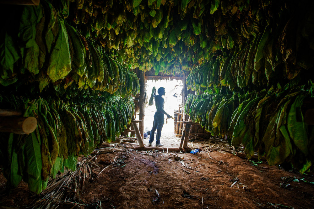 Michael Bonocore Cuba Vinales2016-138-Edit.jpg