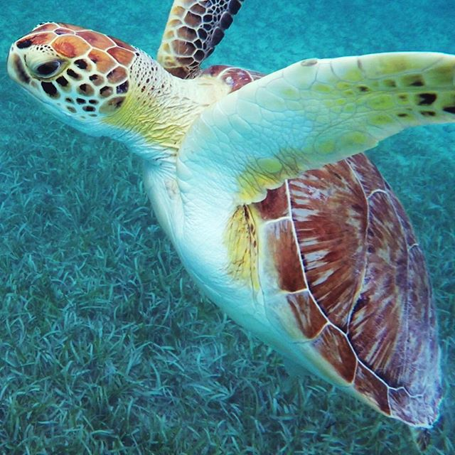 Approaching the week with open arms! #turtle #PuertoRico #aveceric #ericripert