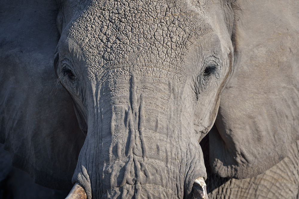 Animals09 copy.jpg