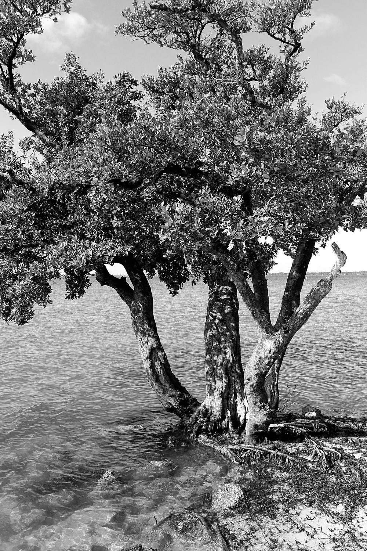 Biscayne Bay.jpg
