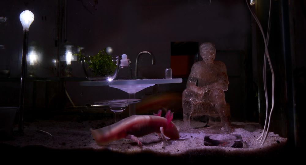 Apolline Grivelet - Aquarium axolotl.jpg