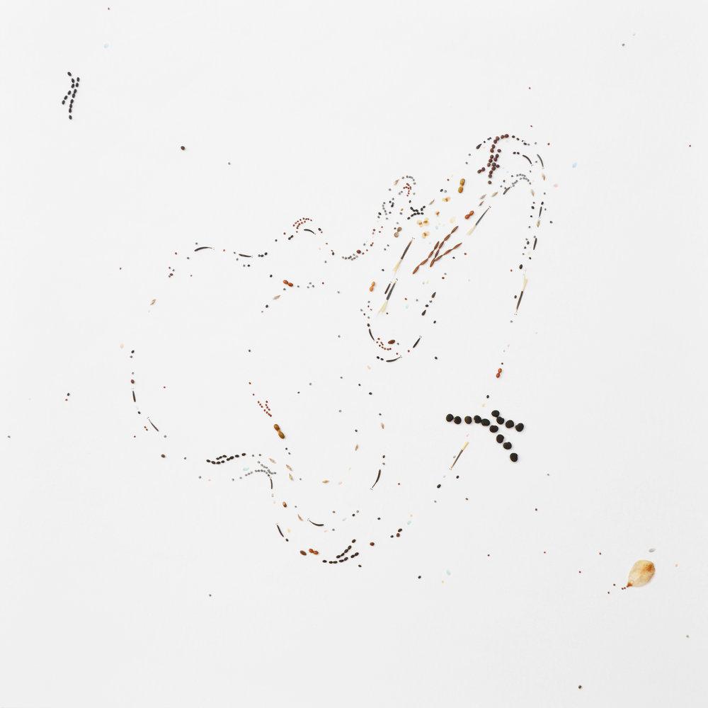 Flux #5, 2018, Fusain, crayon de couleur, graines et vernis sur papier, 34.5x34.5cm.jpg