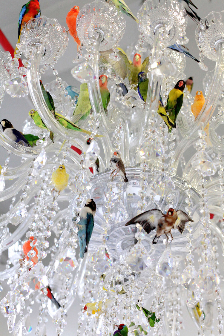 Fs bird chandelier aloadofball Gallery