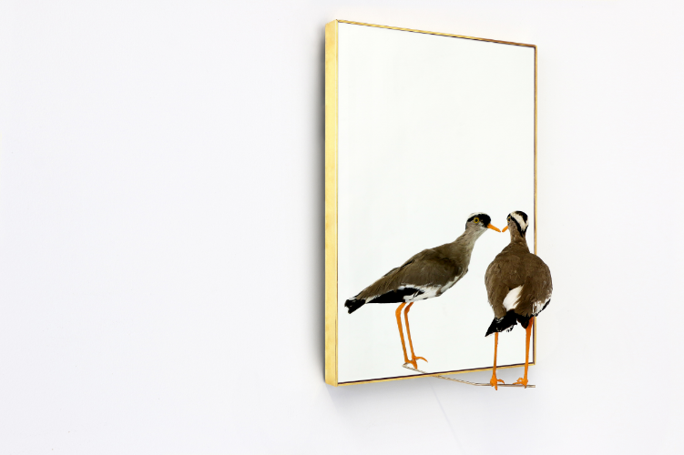 "2016  Taxidermy bird, Brass and Mirror.  13 x 19 x 9 in.  ""I wanted to create a small piece that could try to talk about death and narcissism in this crazy era of Art Fair selfies"" explains Sebastian ErraZuriz referring to his latest exploration in the blurry lines between art and design.   The artist/designer continues: ""The art fair boom has replicated itself in every city. Within every city and every art fair, the same artworks are replicated in every booth. Of all these replicated artworks the most popular appears to be: ""Mirrored Artworks"" which basically reflect back on the collectors, gallerists and socialites that flood these events looking for props to take selfies with.""  ""On the Edge Staring at Eternal Infinity"" reminds us that the artist used to be the narcissist: their famous ego of artist was historically considered a necessary evil often required to create deeply reflective and introspective artworks. Nevertheless today the artist's ego and creative result seems overshadowed by the much more powerful narcissism of the collector, the socialite and their true passion: The art of the self. Or maybe: ""the art of the selfie"", where being seen amongst art is now more important than seeing art.  ""On the Edge Staring at Eternal Infinity"" was created for the context of the fair as a comment on this new trend that tends to take away the attention from the art and to increase everyone's tendency to narcissism. The delicate taxidermy bird that seems to be staring at itself in the mirror, forces the viewer to confront the temptation to look at his own reflection when also looking at the art piece echoing death and it's eternal reflection.  Sebastian ErraZuriz explains: ""The art world was always accused of being embedded in ""Smoke and Mirrors"". Today that smoke has gone and we are only left with the mirrors. These Mirrored Artworks repeated in every booth that are the reflection of our times, a populist, Trumpian portrait that the art market may deserve?"""