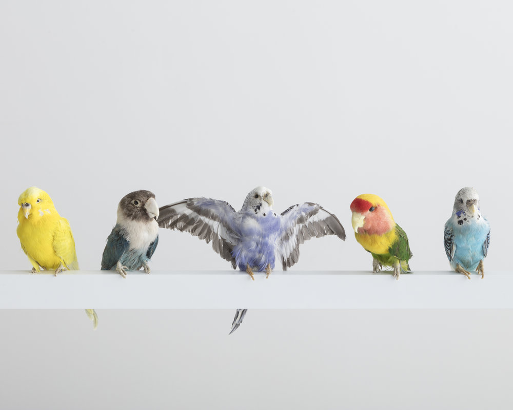 Neon Bird Lamp 3.jpg