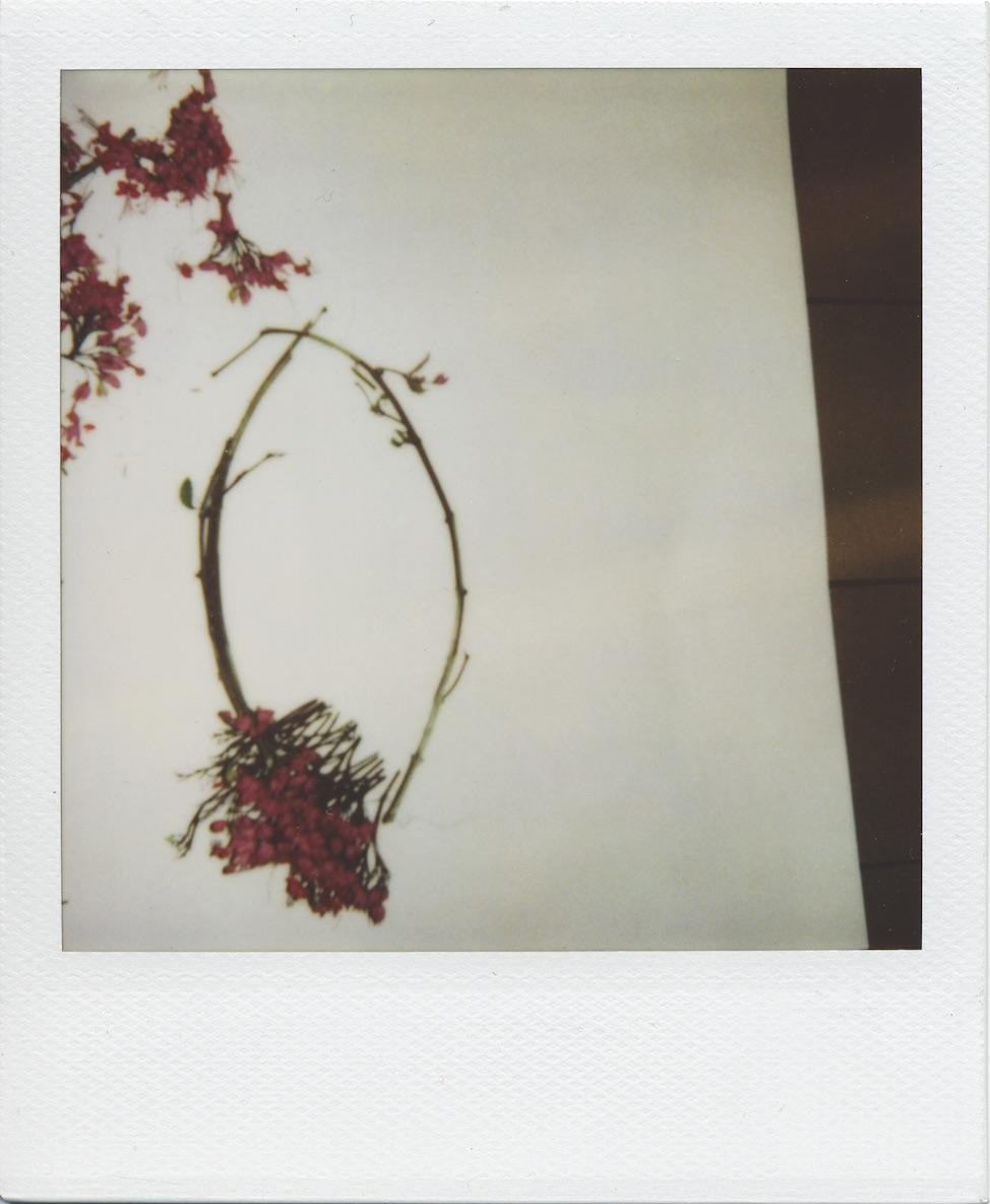 polaroid6.jpg