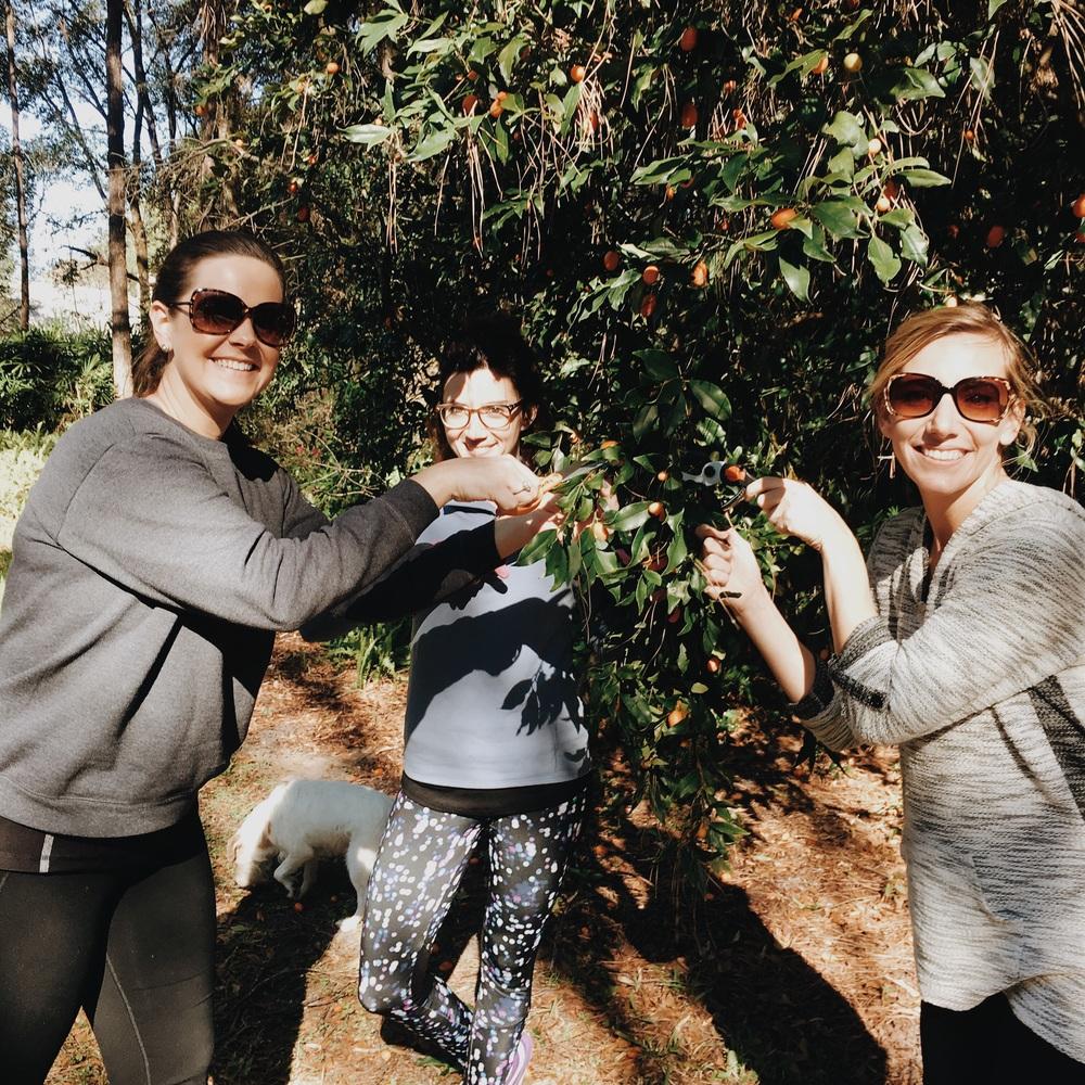 Here we are clipping kumquats!
