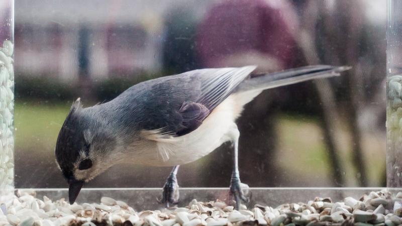 032016_Birdfeeder-065-iarbp.jpg