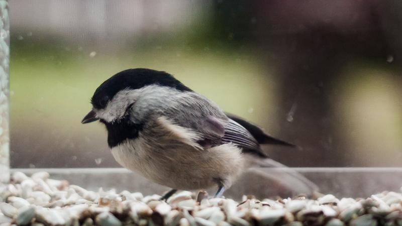 032016_Birdfeeder-125-iarbp.jpg