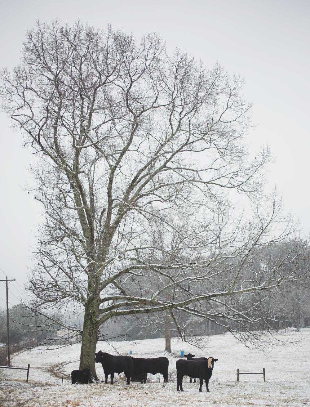 CNP SnowDay2015_3511.jpg