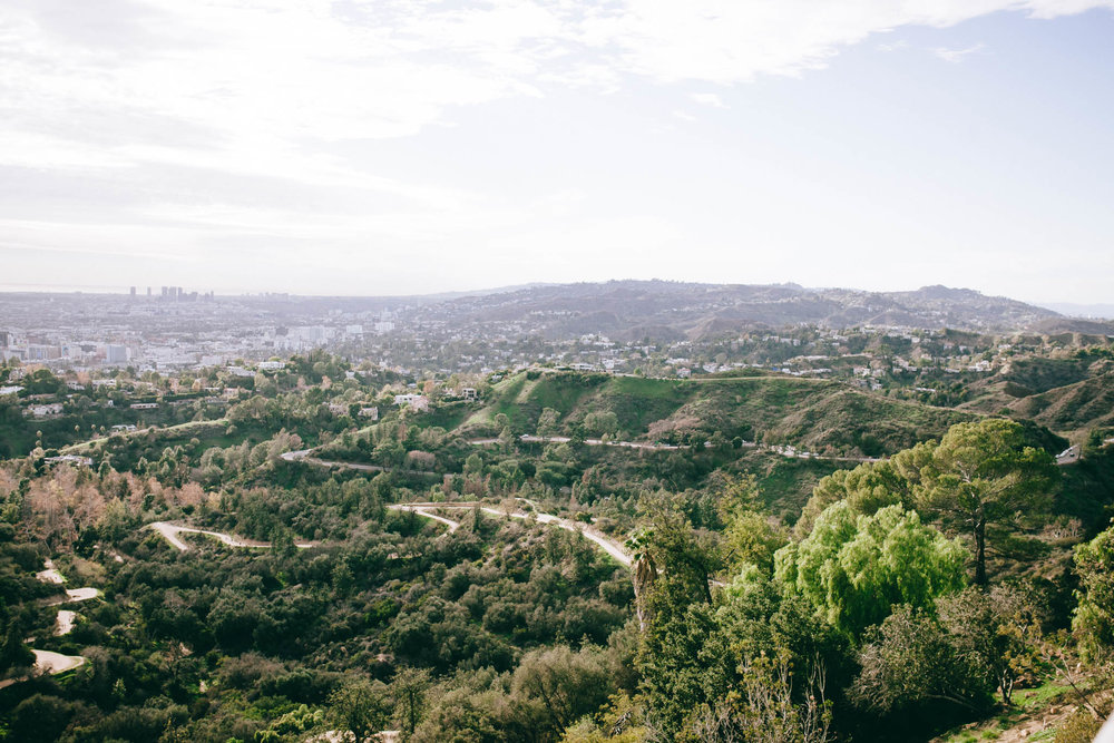 There were seas of green that went on for miles up in the Hollywood Hills.