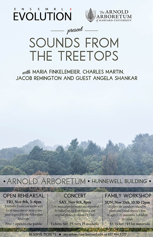 Sounds From the Treetops