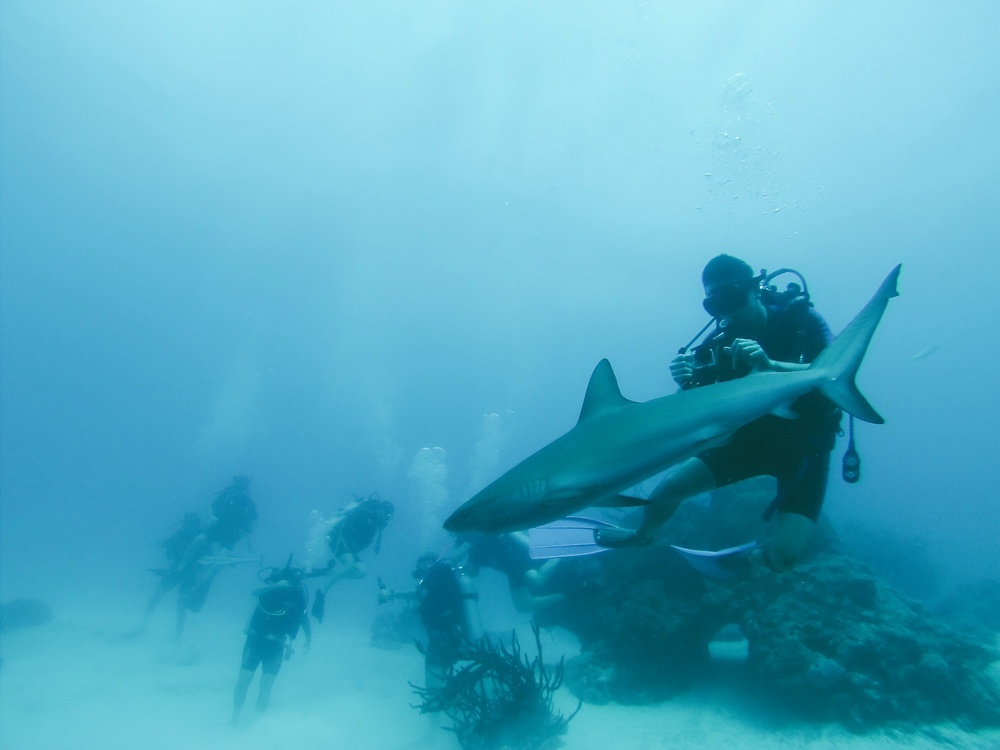 Diving with reef sharks at The Blue Hole