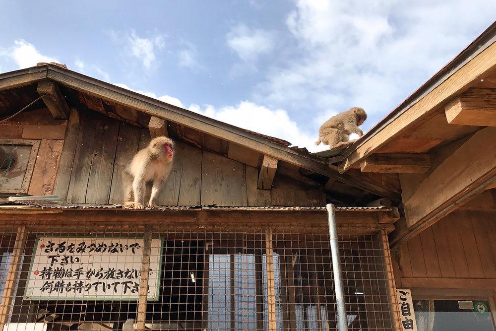 chrissihernandez-japan-kyoto-monkeypark-01