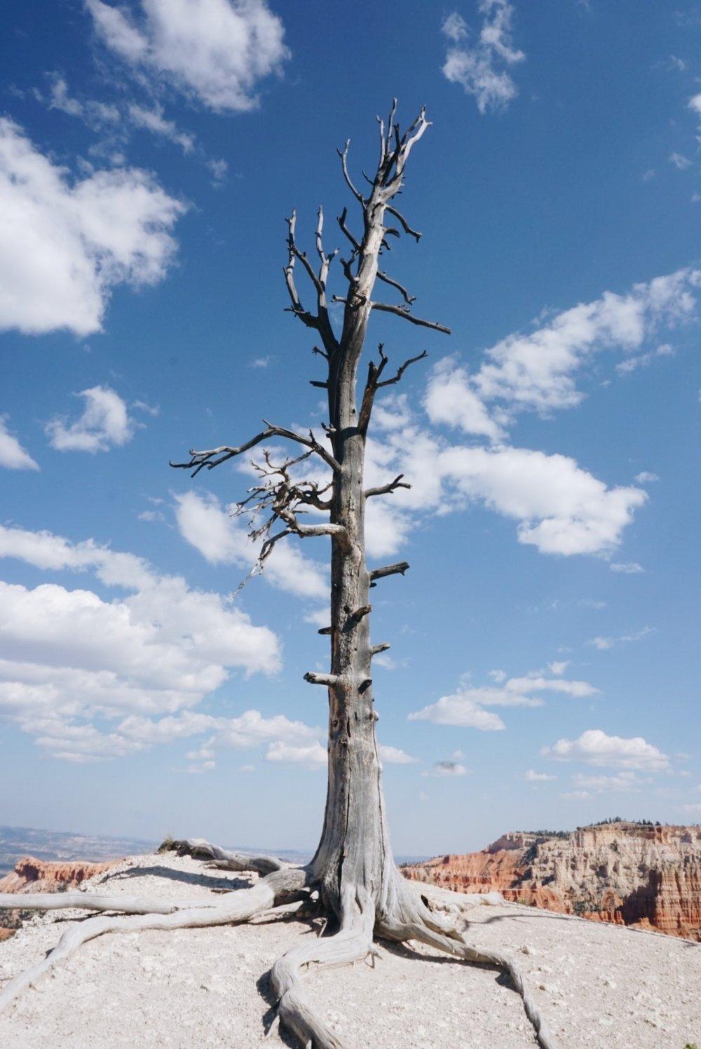 chrissihernandez-utah-bryce-canyon (3).JPG