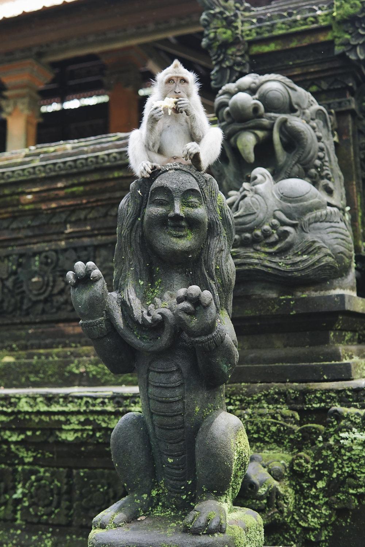 chrissihernandez-bali-ubud-monkeyForest (34)copy.jpg