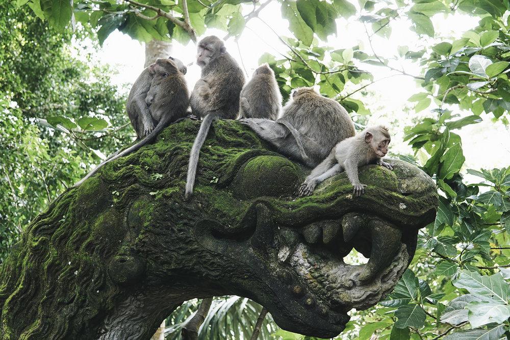 chrissihernandez-bali-ubud-monkeyForest (56)copy.jpg
