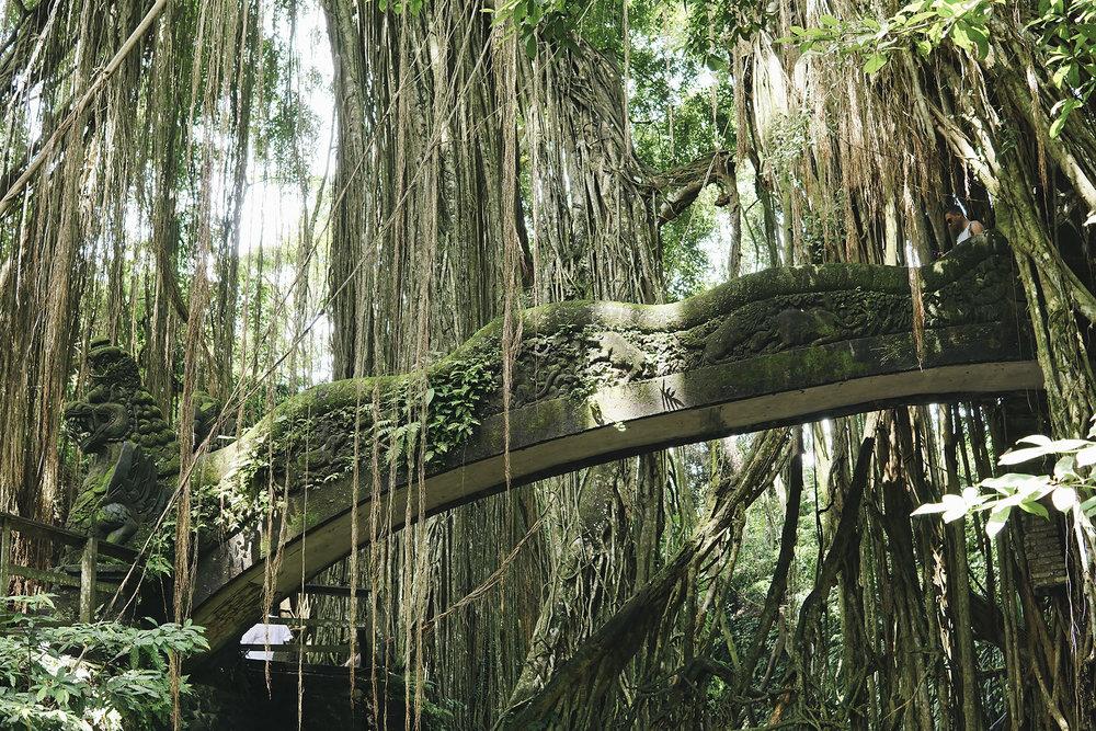chrissihernandez-bali-ubud-monkeyForest (63)copy.jpg