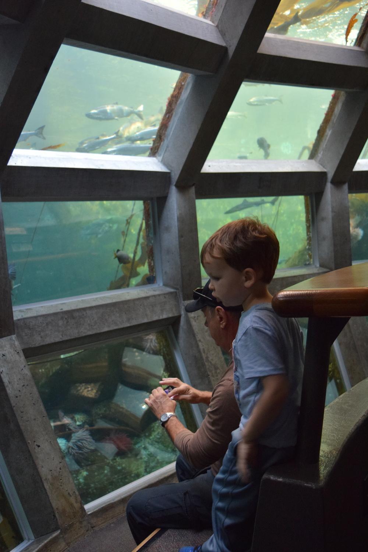 Figure  1 : Underwater Dome at the Seattle Aquarium