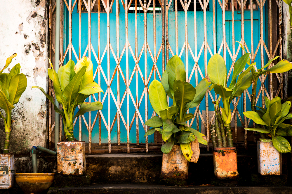 Street plants. Just hangin out. Yangon, Myanmar
