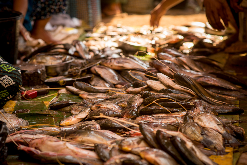 Fish for sale. Inle Lake, Myanmar