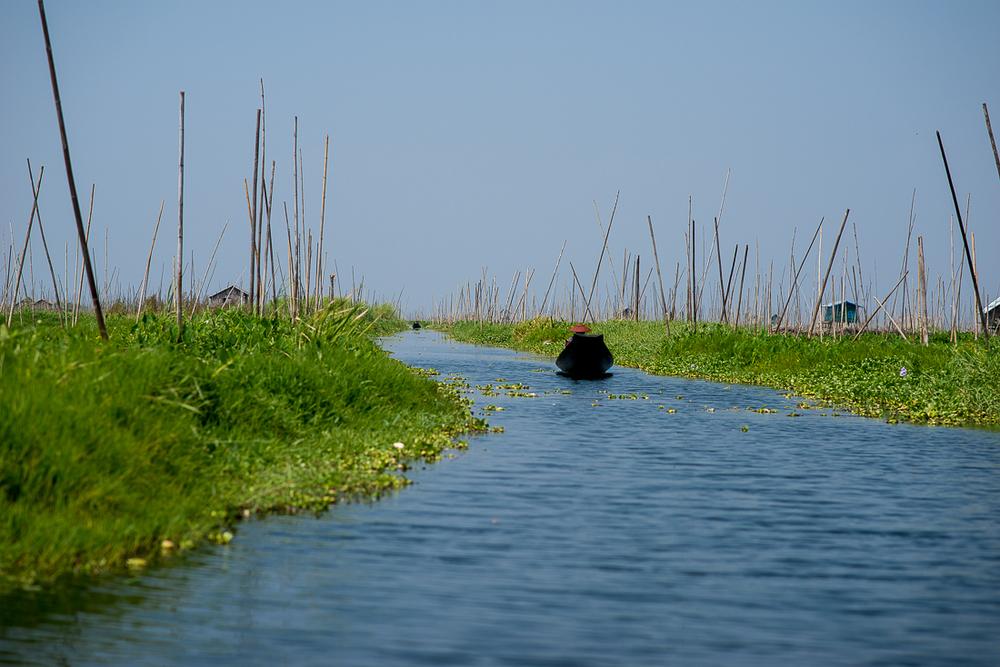Making our way through a floating garden. Inle Lake, Myanmar