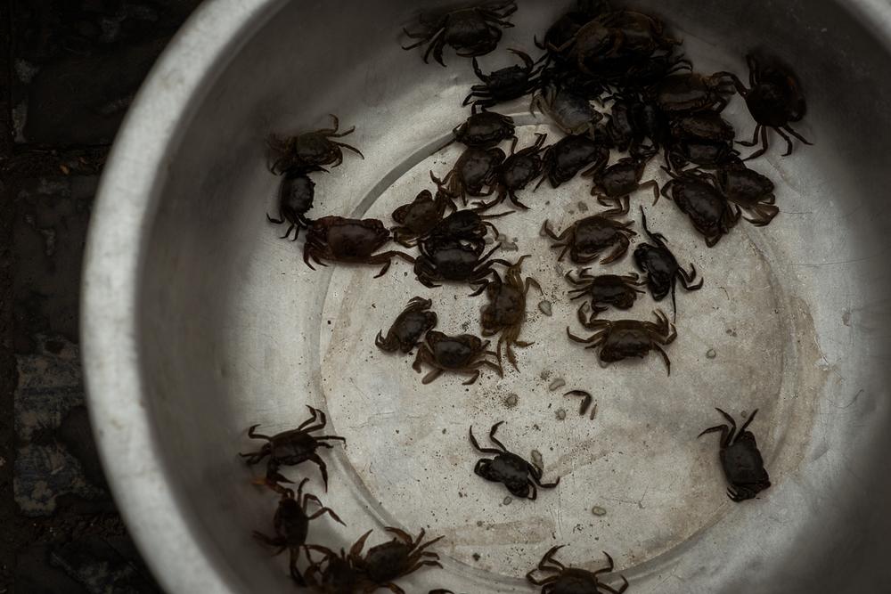 Crabs for sale. Hanoi, Vietnam