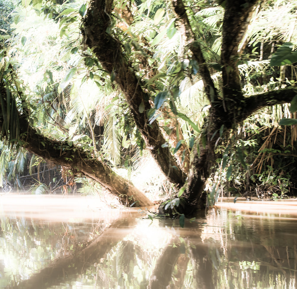 The Amazon...