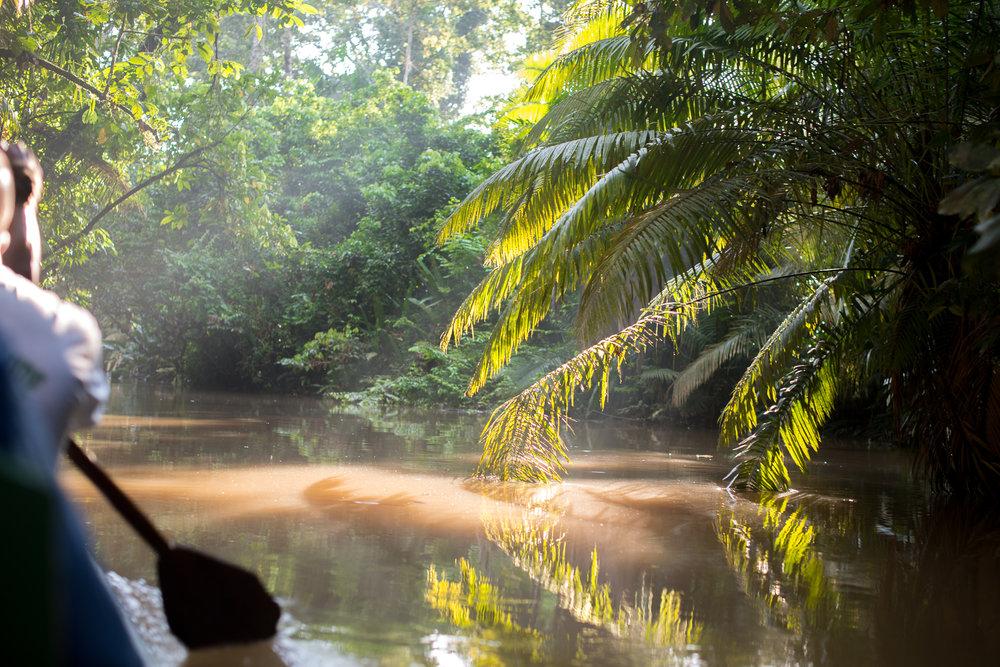 Paddling through the Amazon...