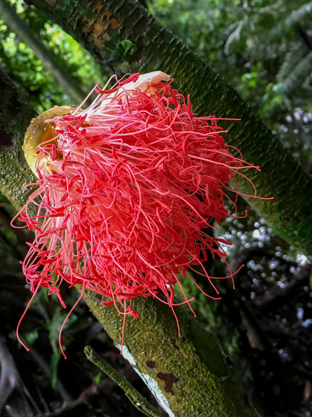 Some crazy plants in the Amazon...