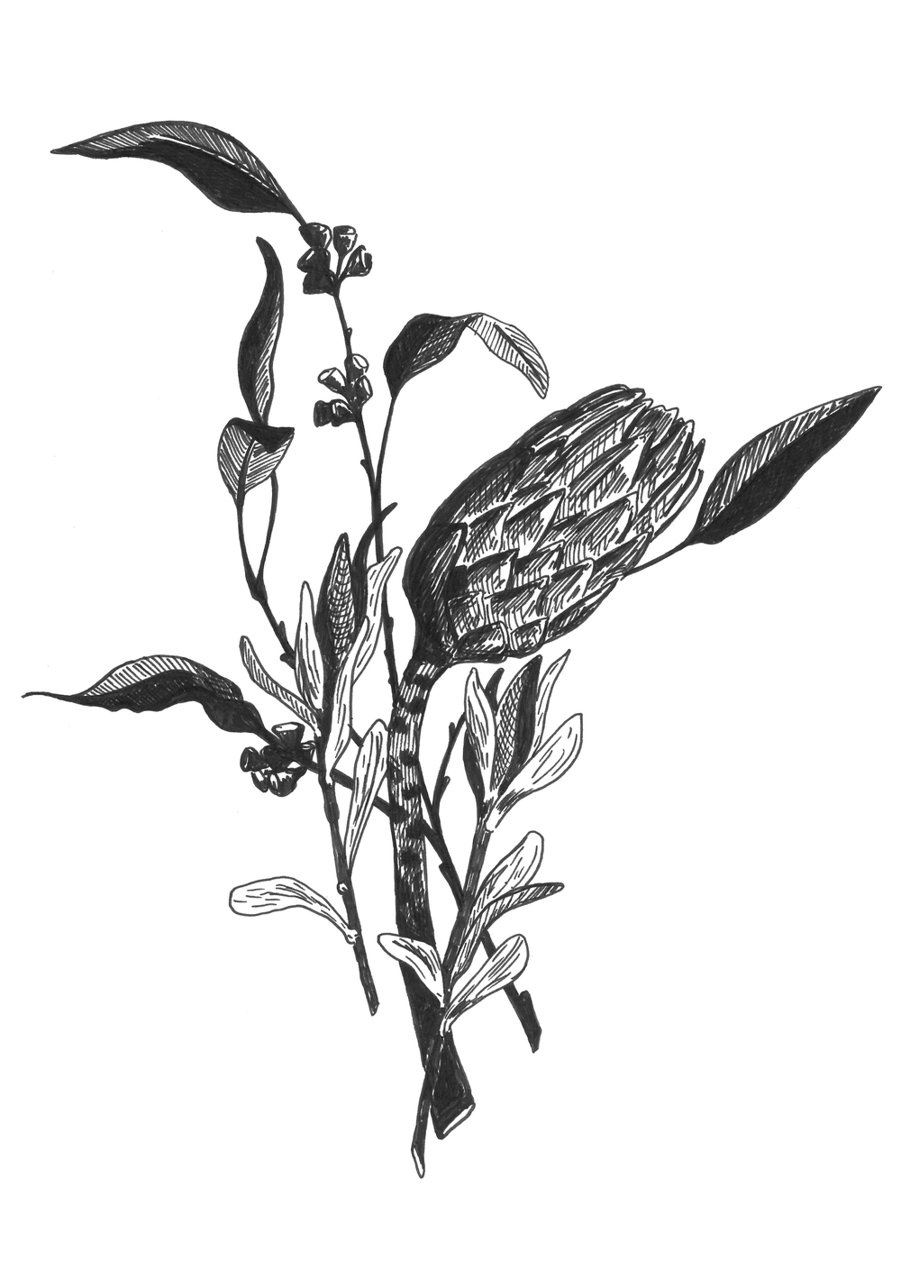 eucalyptus bouquet (5-7 ratio).png