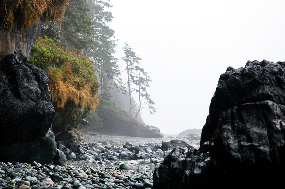 vancouver island 330.jpg