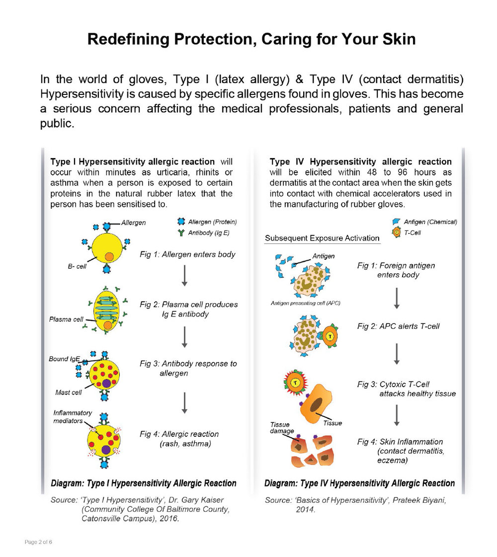 Diagram:  Hypersensitivity Skin Reaction    Click to Enlarge