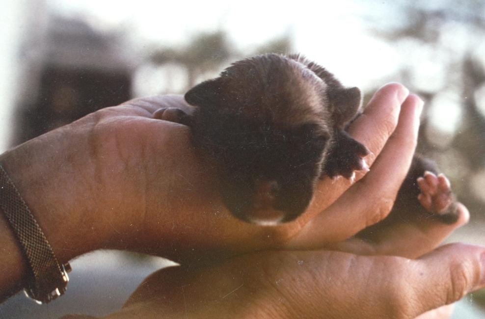 shebekia-puppy.jpg