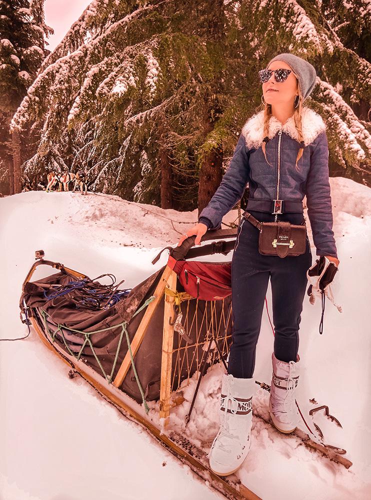 dog-sledding-whistler