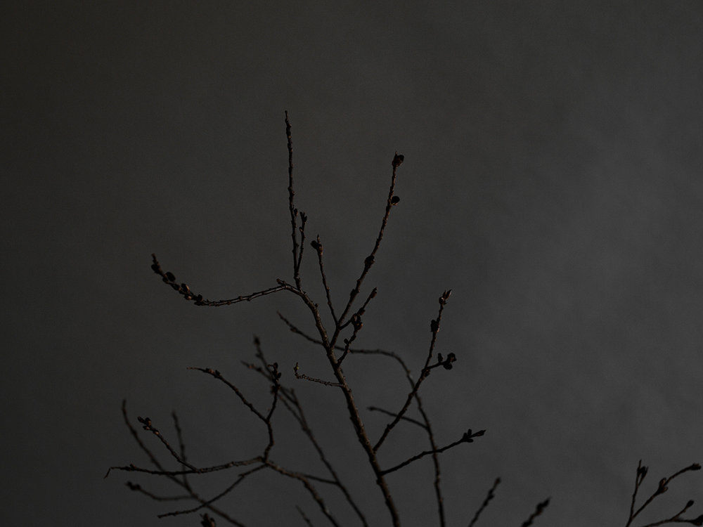 winter floral design selva ben holtrop509.jpg