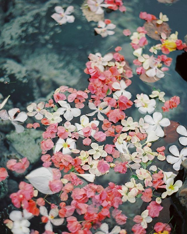 Petals floating on the water in Hawaii