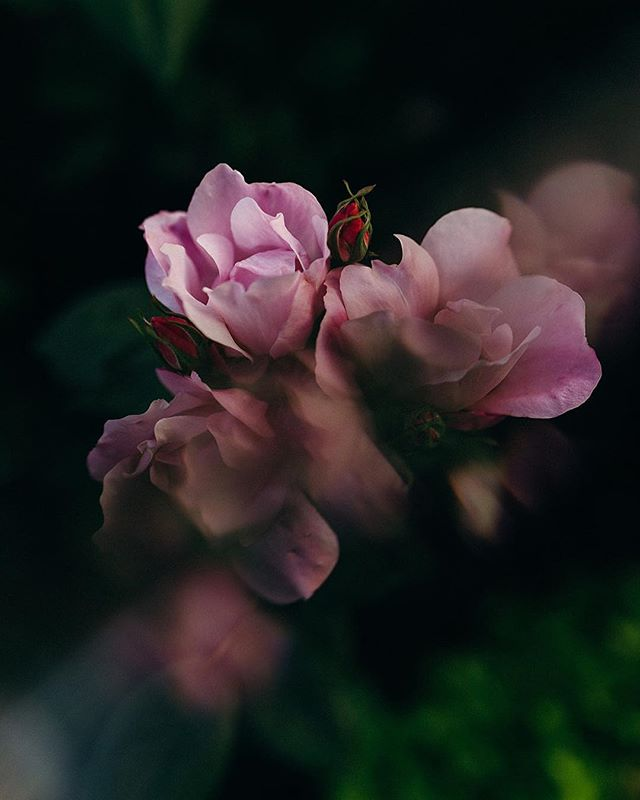 City street roses 😍