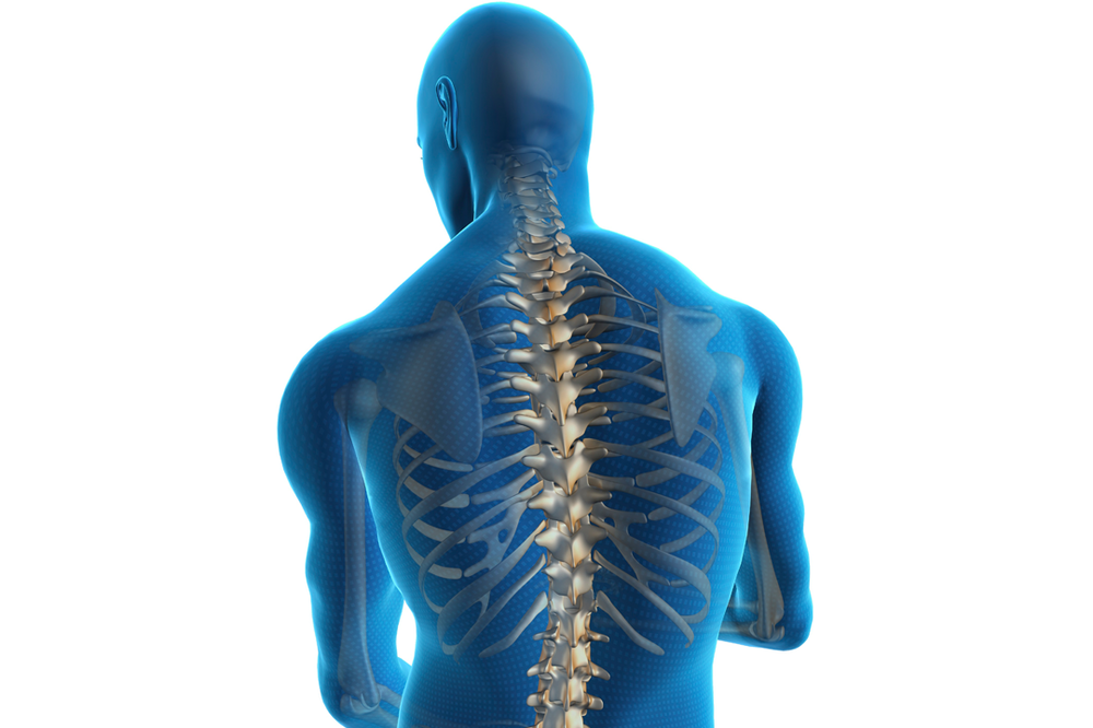 spinal-cord.png