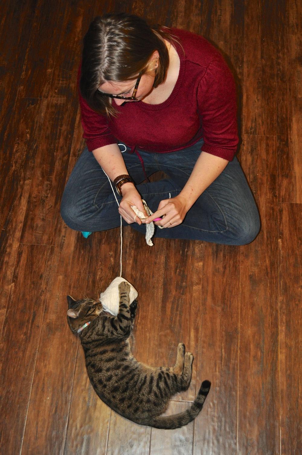 Meet Robert the Cat!